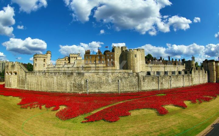 ceramic-poppies-fill-the-tower-of-london-moat-to-commemorate